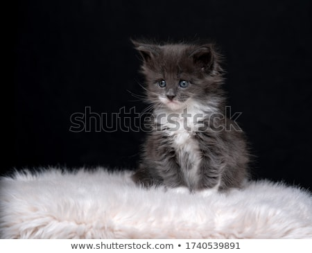 Tiny 4 Week Old Kitten on White Background  Stock photo © tobkatrina