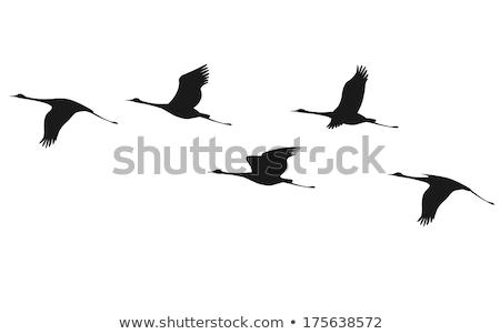 Egret Flying in Silhouette Stock photo © azamshah72
