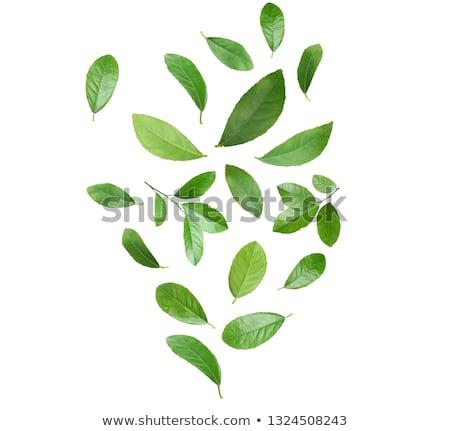Frescos hojas placa blanco fondo blanco Foto stock © Digifoodstock