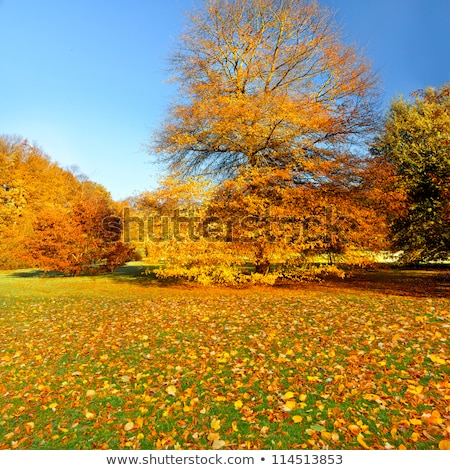 Sonbahar manzara yol kuru çim ağaçlar Stok fotoğraf © Kotenko