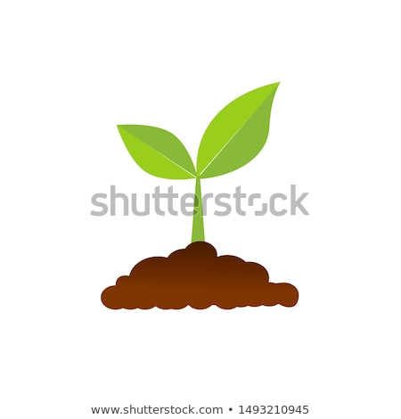 苗 · ベクトル · 現実的な · 緑色の葉 · 緑茶 · ツリー - ストックフォト © Macartur888