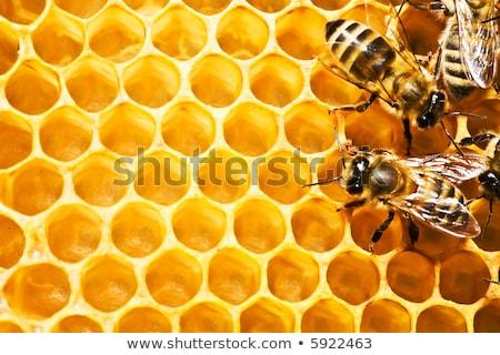 view · lavoro · api · oro · ape - foto d'archivio © freeprod