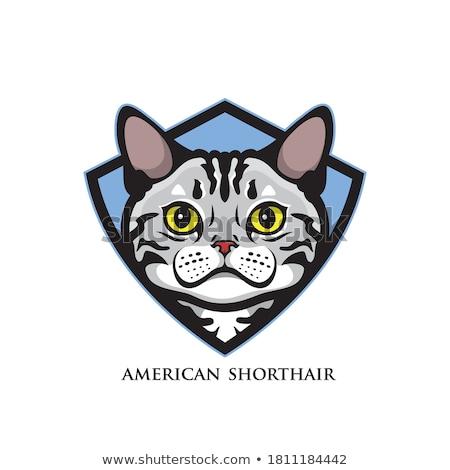 Gato escudo símbolo mascota abrigo armas Foto stock © MaryValery