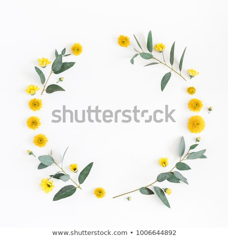 Ramki projektu żółte kwiaty ilustracja tle pozostawia Zdjęcia stock © colematt