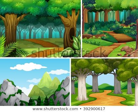 Cuatro naturaleza camino bosques ilustración carretera Foto stock © colematt