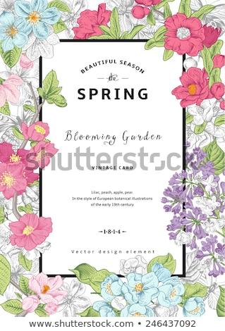 tavasz · kártya · orgona · keret · virágok · virágmintás - stock fotó © Kotenko