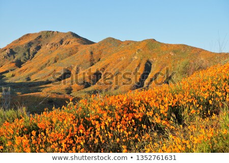 Californie coquelicots paysage super fleurir fleurs Photo stock © feverpitch