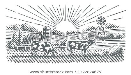 mucca · campo · illustrazione · rosolare · albero · erba - foto d'archivio © colematt
