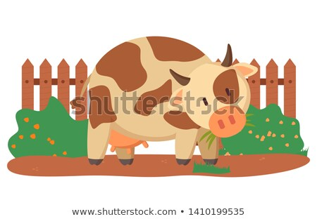 Spotted Cow Near Fence and Green Bushes Vector Stock photo © robuart