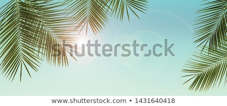 Foto d'archivio: Palme · cielo · blu · estate · esotiche · natura · spiaggia