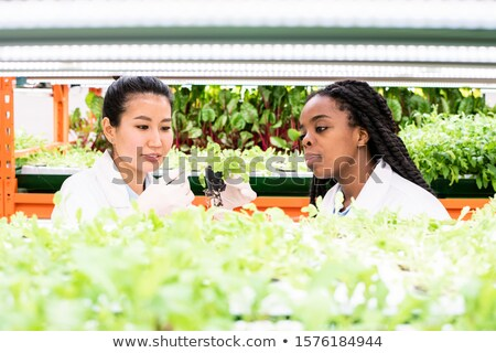 Asian woman in whitecoat discussing new sort of plant with African colleague Stock photo © pressmaster