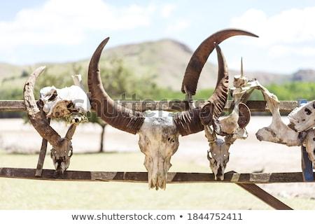 Buffalo Hunt Stock photo © Stocksnapper