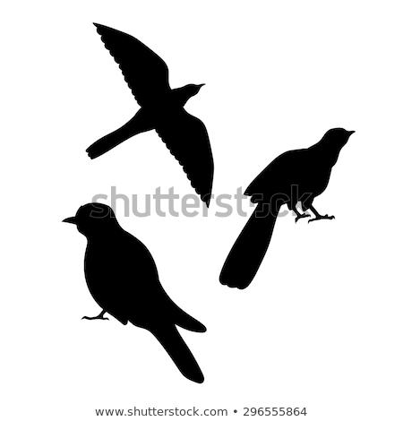 silhouet · koekoek · achtergrond · zwarte · vrijheid · witte - stockfoto © perysty