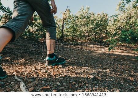 пути турист деревья итальянский Альпы Сток-фото © Antonio-S