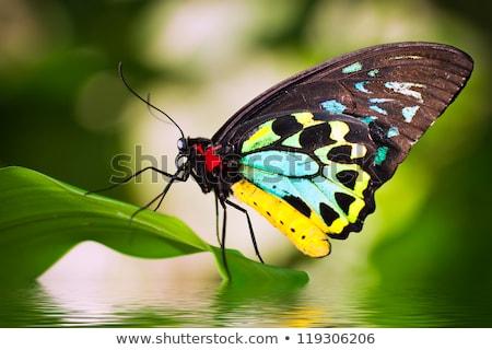 бабочка глаза путешествия черный лет Сток-фото © MojoJojoFoto