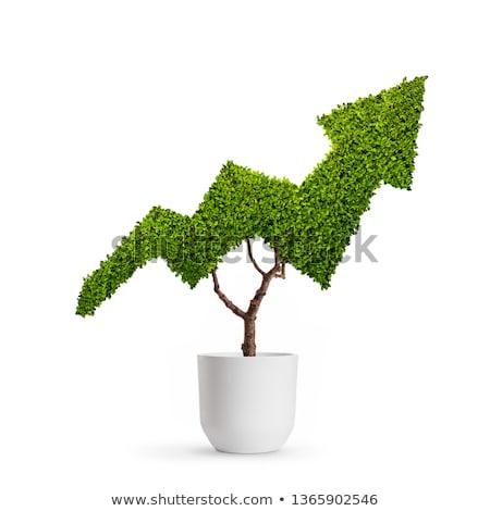 groeiend · economie · groei · business · grafiek · jonge - stockfoto © lightsource