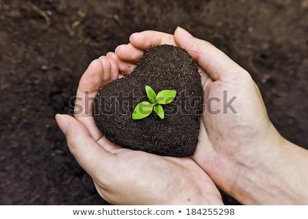 Groene hart plant tuin hartvorm bodem Stockfoto © pab_map