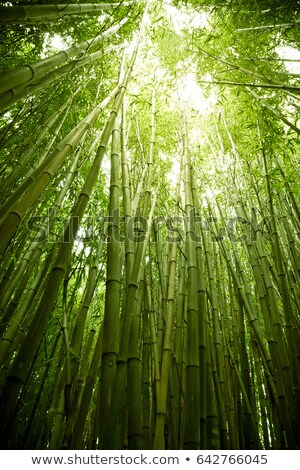 плотный · бамбук · лес · Киото · Япония · дерево - Сток-фото © smithore