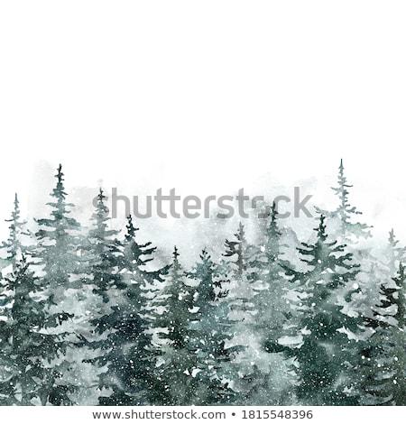 snowy conifer stock photo © derocz