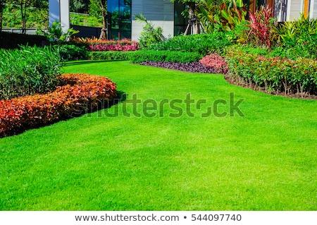 Vorgarten Gartengestaltung geräumig Landschaft Rasen Bäume Stock foto © iriana88w