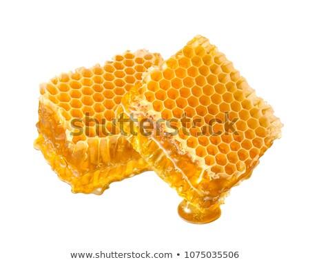 Dwa plastry plaster miodu biały zdrowia Pszczoła Zdjęcia stock © Valeriy