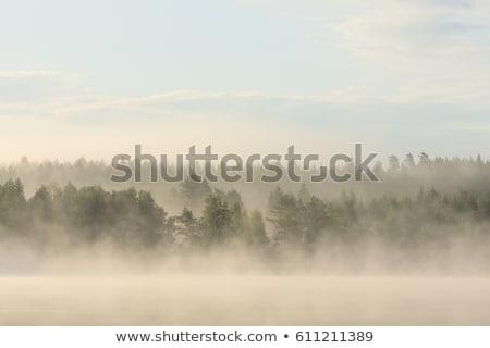 erdő · Finnország · fa · természet · zöld · levelek - stock fotó © juhku