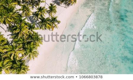 Palmiers plage océan bleu île tropicales Photo stock © user_9870494