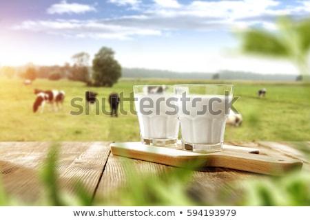 Latte fresco illustrazione latte animale recinzione agricoltore Foto d'archivio © adrenalina