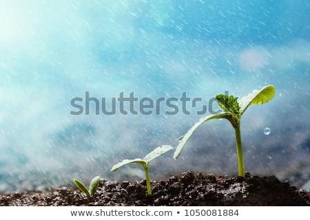 esik · az · eső · farm · üres · ranch · szomorú · magányos - stock fotó © smuay