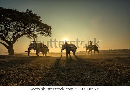 wild life stock photo © bluering