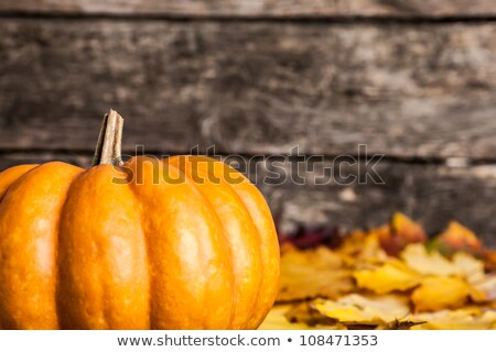 pumpkin with shallow depth of field stock photo © Phantom1311