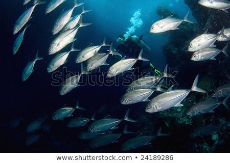 Underwater scene with school of tuna Stock photo © bluering