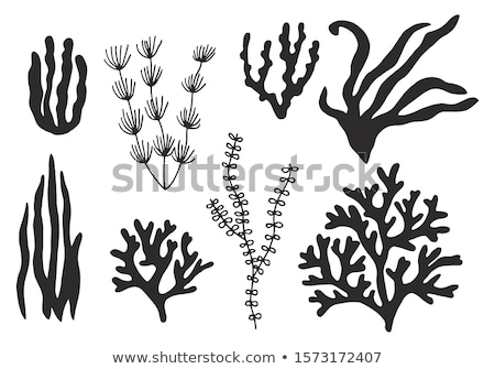 Coral & Seaweed Stock photo © Undy