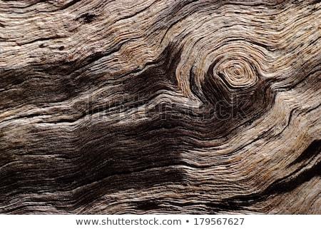 Fa ugatás közelkép természetes textúra fa Stock fotó © latent