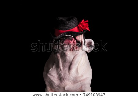 funny french bulldog chewing on its hat  Stock photo © feedough