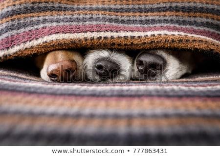 Cute пару кровать человека Сток-фото © wavebreak_media