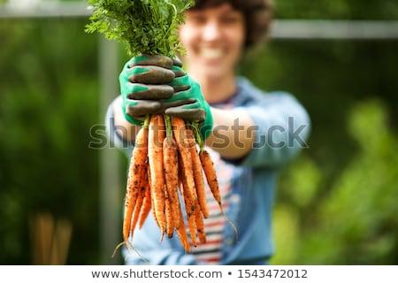 mãos · jovem · planta · ecologia · negócio - foto stock © rastudio