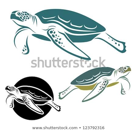 Océan vert tortue icône isolé blanche Photo stock © Valeo5