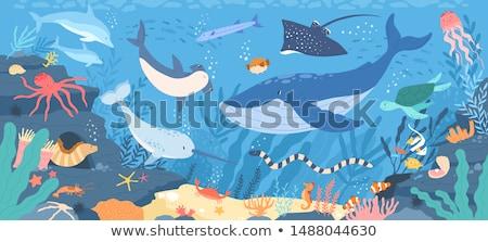 aranyos · meduza · vágási · körvonal · állat · rajz · tengeri - stock fotó © bluering
