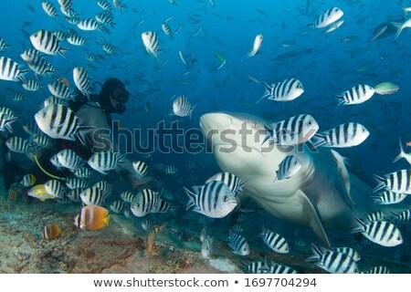Sea animals and four scenes underwater Stock photo © colematt