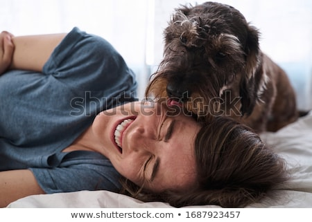 A cute teckel dog at home on bed Stock photo © Lopolo