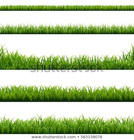 green grass border white background stock photo © barbaliss