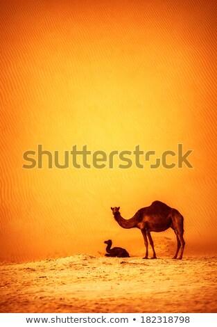 Camelo natureza fronteira ilustração folha fundo Foto stock © bluering