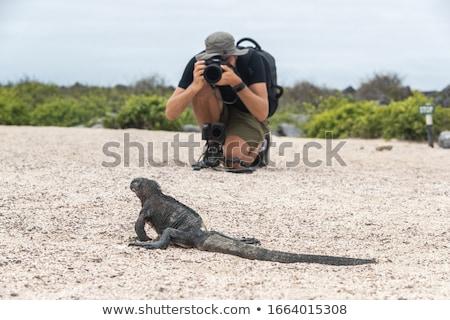Galapagos Christmas Iguana and tourist wildlife photographer taking picture Stock photo © Maridav