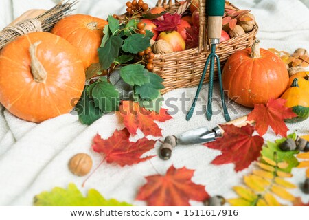 Pommes laisse jardin automne Photo stock © pressmaster