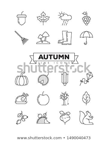 autumn icon set Stock photo © bspsupanut