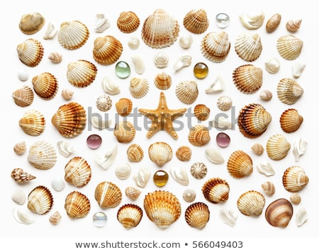 Starfishes and seashells, glass with sand on white background Stock photo © Illia