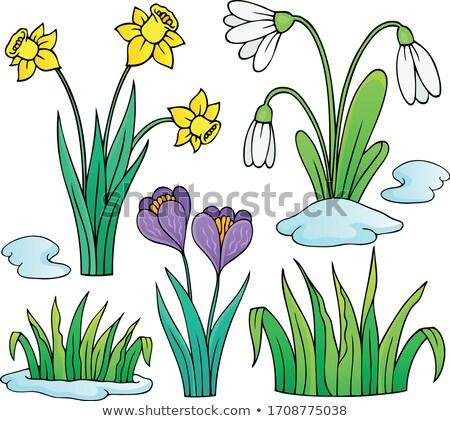 Cedo flores da primavera conjunto flores primavera grama Foto stock © clairev