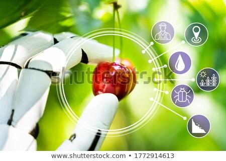 AI Farmer Assistant Picking Fresh Fruit Stock photo © AndreyPopov