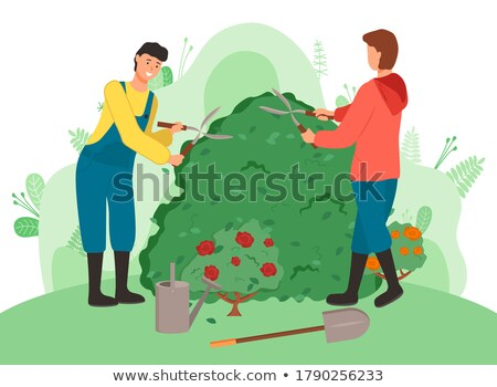 Gardeners cutting bushes cartoon vector illustration. Farmworkers using gardening scissors Stock photo © robuart